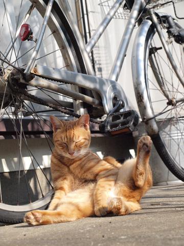 本日 trico!+とうめいロボ@渋谷&足上げ猫