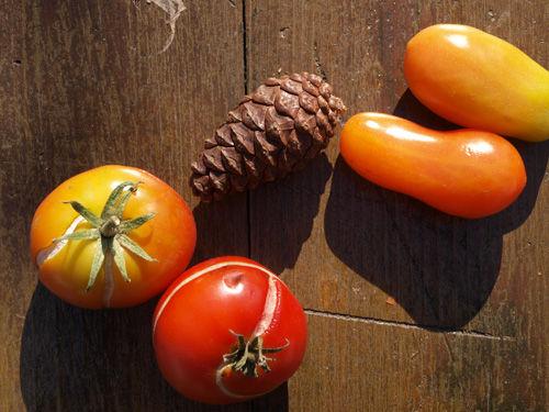 まつぼつトマト