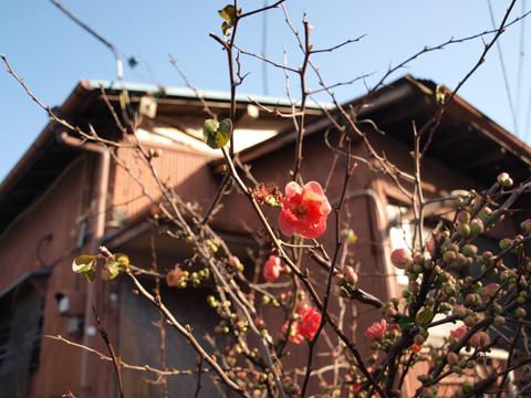 春のご近所散歩