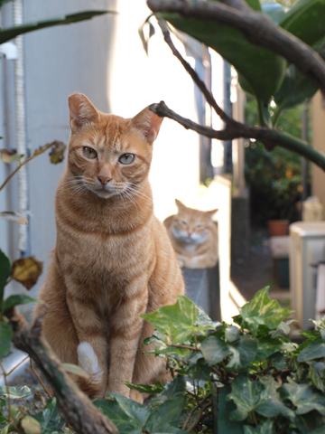 いざ六本木&連続猫