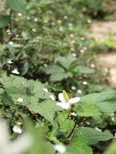 食べられる庭作り 第3回『雑草と仲良く!』