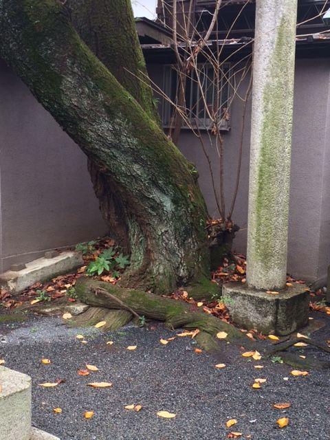 20151203御岳稲荷神社0