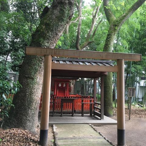 20200628 生田森坐社の鳥居となったあすなろの木