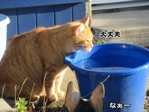 水飲み 12