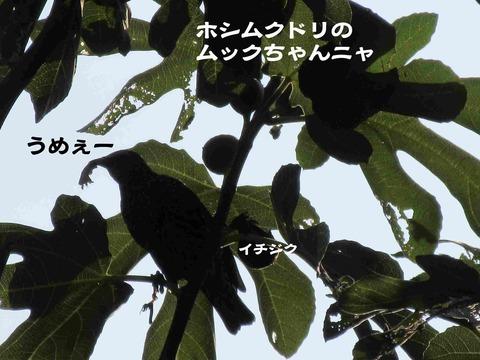 さぼり 9