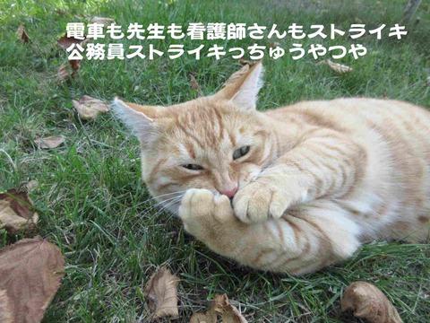 さぼり 5