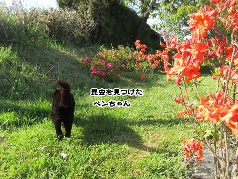 庭のお花 6