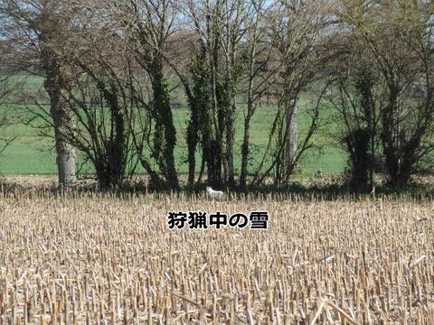 田舎の光景 4