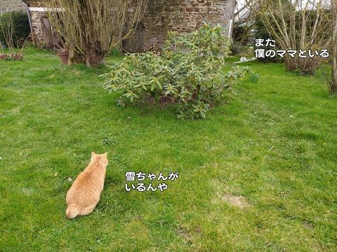 庭の平和 3