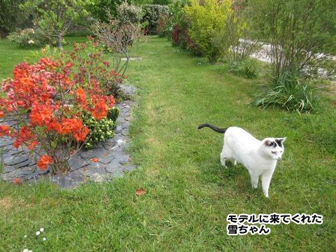 庭のお花 4