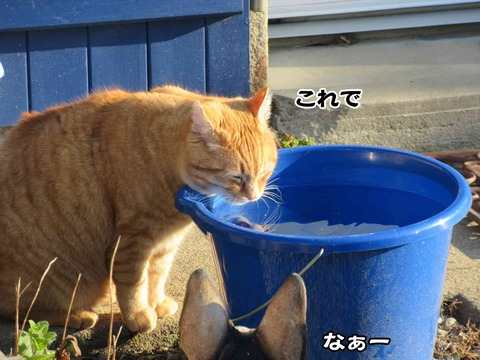 水飲み 11