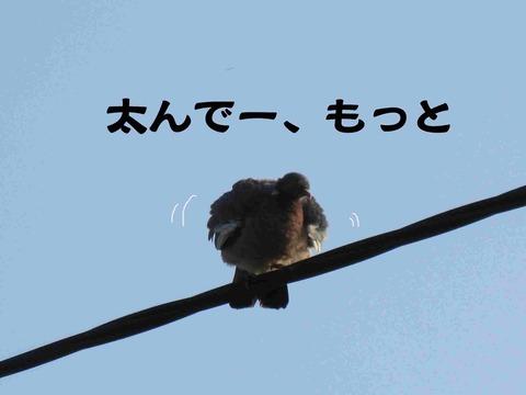 さぼり 16