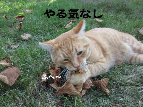 さぼり 3