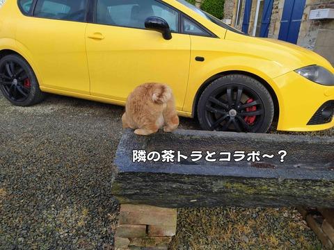 派手な車 5