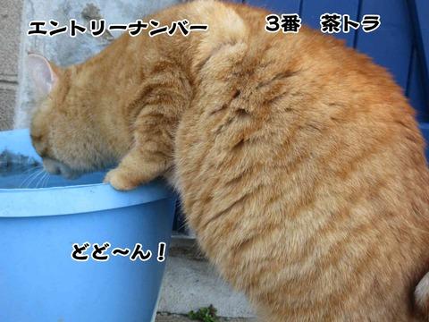 水飲み 3