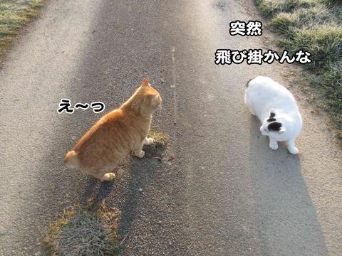 暇な猫 3