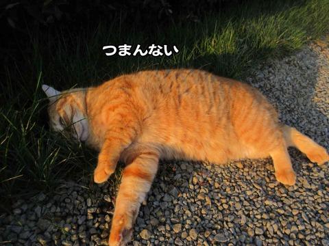 暇な猫 5