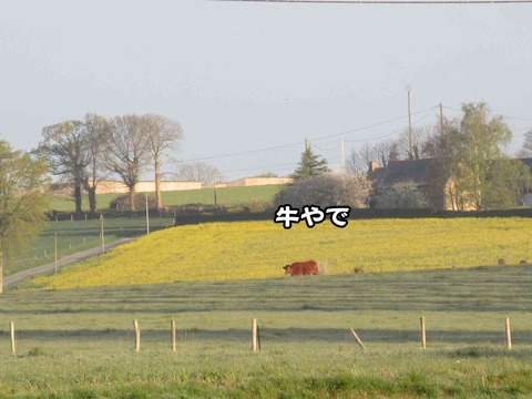 後ろの畑 4