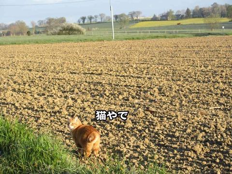 後ろの畑 3