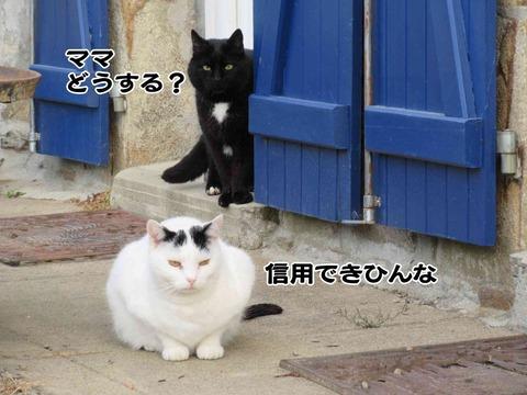 入っちゃダメ 5