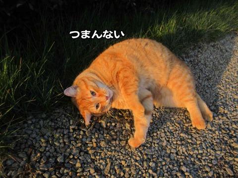 暇な猫 4