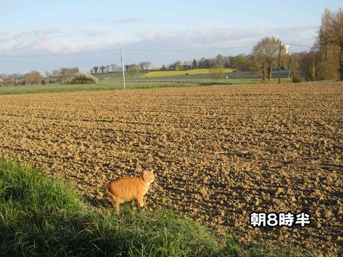 後ろの畑 2
