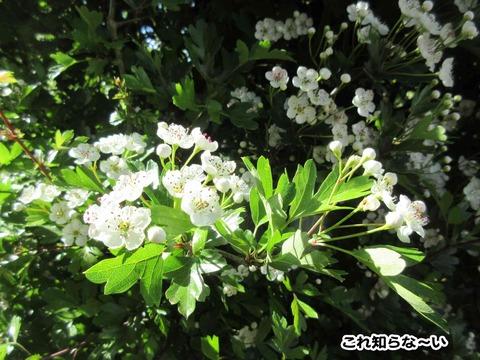 庭のお花 7