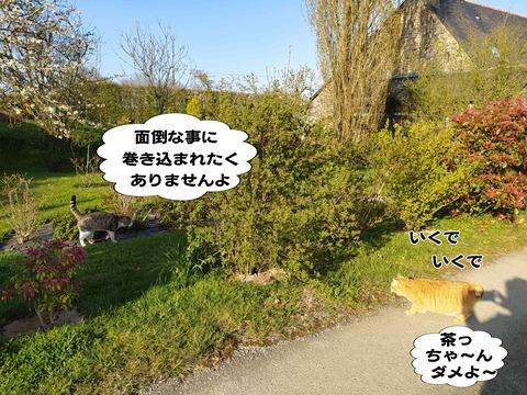 シマヤンを探せ 9