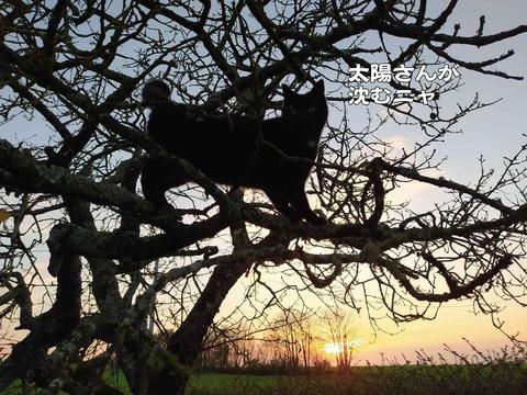 夕陽の猫 3