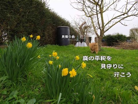 庭の平和 6