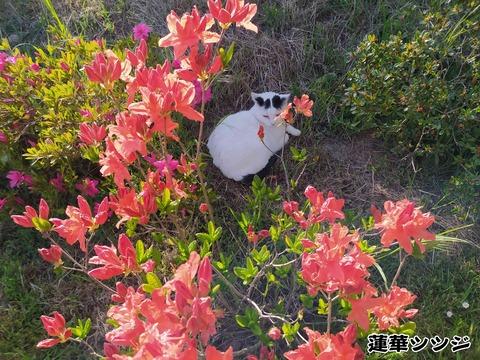 庭のお花 2