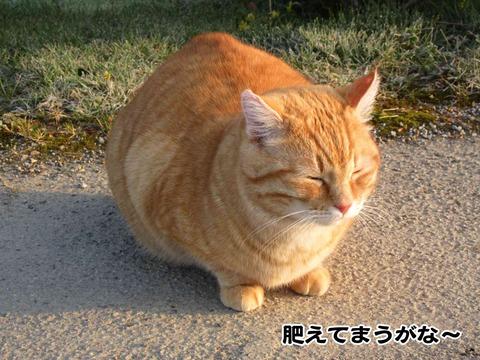 暇な猫 8
