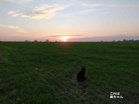 夕陽の猫 7
