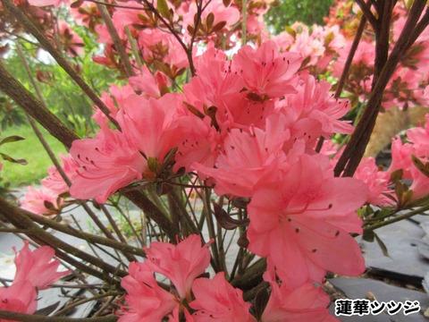 花と茶トラ 5