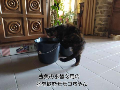 モモコちゃん 1