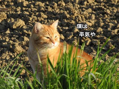 後ろの畑 6