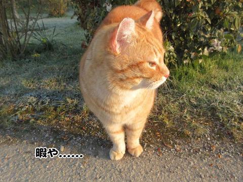 暇な猫 1