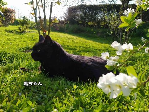 猫写真 1