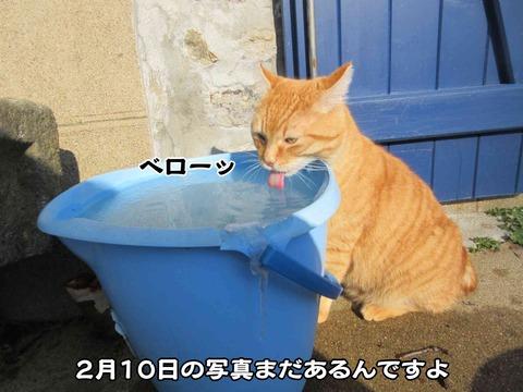 水のみ 1