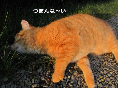 暇な猫 6