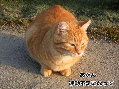 暇な猫 7