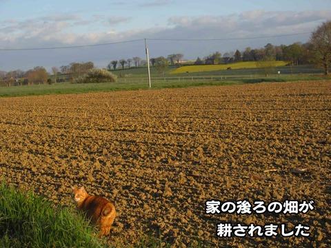 後ろの畑 1