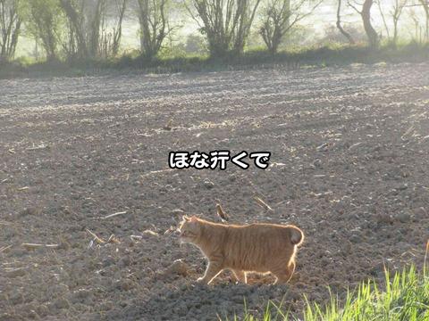 後ろの畑 7