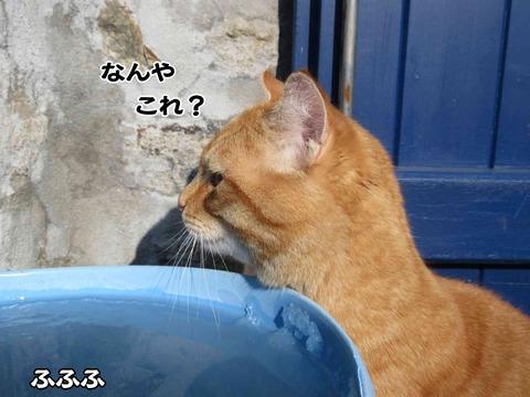水のみ 4