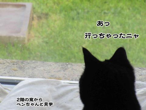 カササギ 5