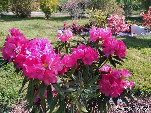 庭のお花 1