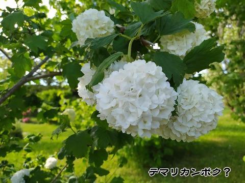 庭のお花 3