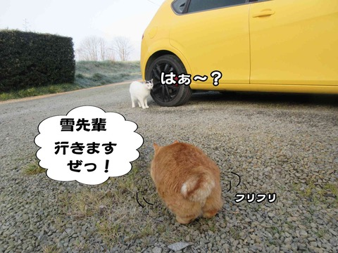 暇な猫 2