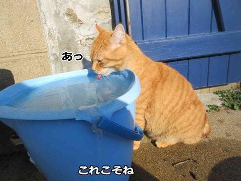 水のみ 2