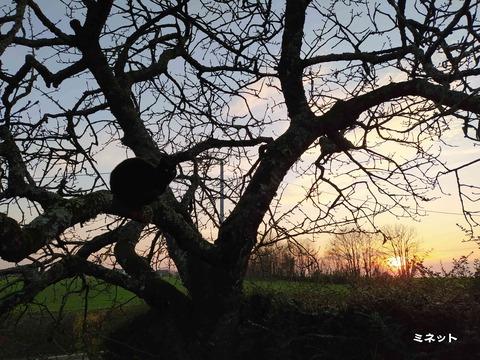 夕陽の猫 4